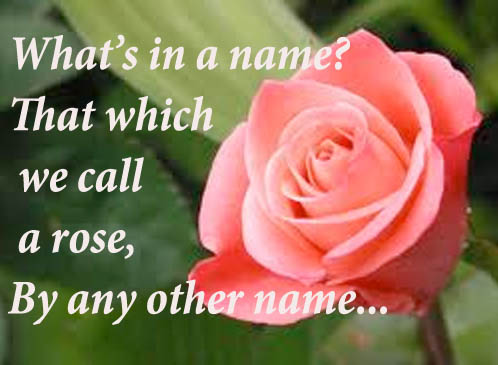 Famous Shakespeare Quote Among Rose Quotes Romeo And Julietyour