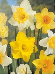 Daffodils, that come before the swallows dare, and take The winds of March with beauty